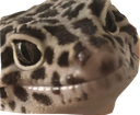 Emoji for sexylizard