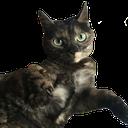 :FTGPcatsam2: Discord Emote