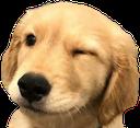 :doggowink: Discord Emote