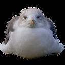 Emoji for seagullblob