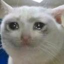 :cat_sad: Discord Emote