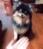 yeontan_handshake