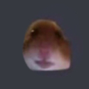 :hamster: Discord Emote