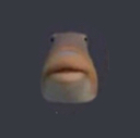 :fish: Discord Emote