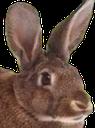 Emoji for zacksrabbit