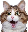 Emoji for shockcat