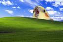 la_windowsbirb