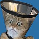 Emoji for JudgementCat