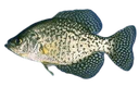 Emoji for crappie