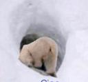Ciao_bear