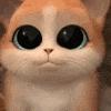 D_Kitten2