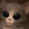 D_Kitten3
