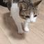 Cat_Fall