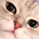 Cat_Look