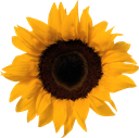 :sunflower: