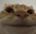 AYS_cat