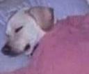 :sleep: