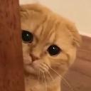 Cat_Shy