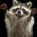 RaccoonHug