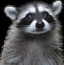 RaccoonSad