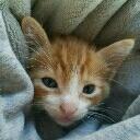 CATS:KYS