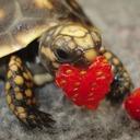 Turtles 4 Life