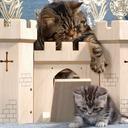 The Cat Castle