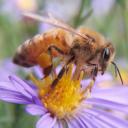 Apiarists/Beekeepers