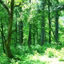 おいでよ お絵描きさんの森