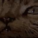 jones the cat 2: second coming