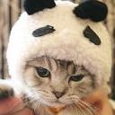 Panda & Katzenfreunde