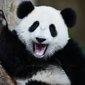 Icon for 🐼PANDA'S ARE GREAT🐼