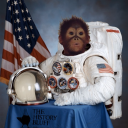 monkey in space