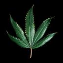 -==-WeedServer-==-
