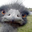 Emu Bot Habitat