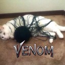 Marvel: Venom Bomb