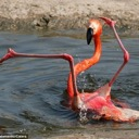 Flamingos Unite ~ A Place To Be Yourself :D