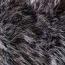 ⌊ Fluffy ⌉