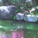 Koi's Pond