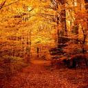 Greywood (Fall edition!)