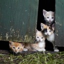 Kitty Cat Condo