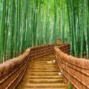 BambooTown