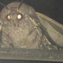 Moth Memers