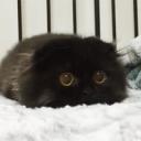 Cat community/Crossedmine PE