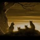 ~Warrior cats Reborn~