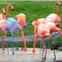 Fuckin' Flamingos