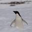 Humane Penguin Society