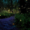 Land of the Fireflies