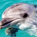 The Forgotten Dolphin