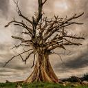 The Hill The Tree Society